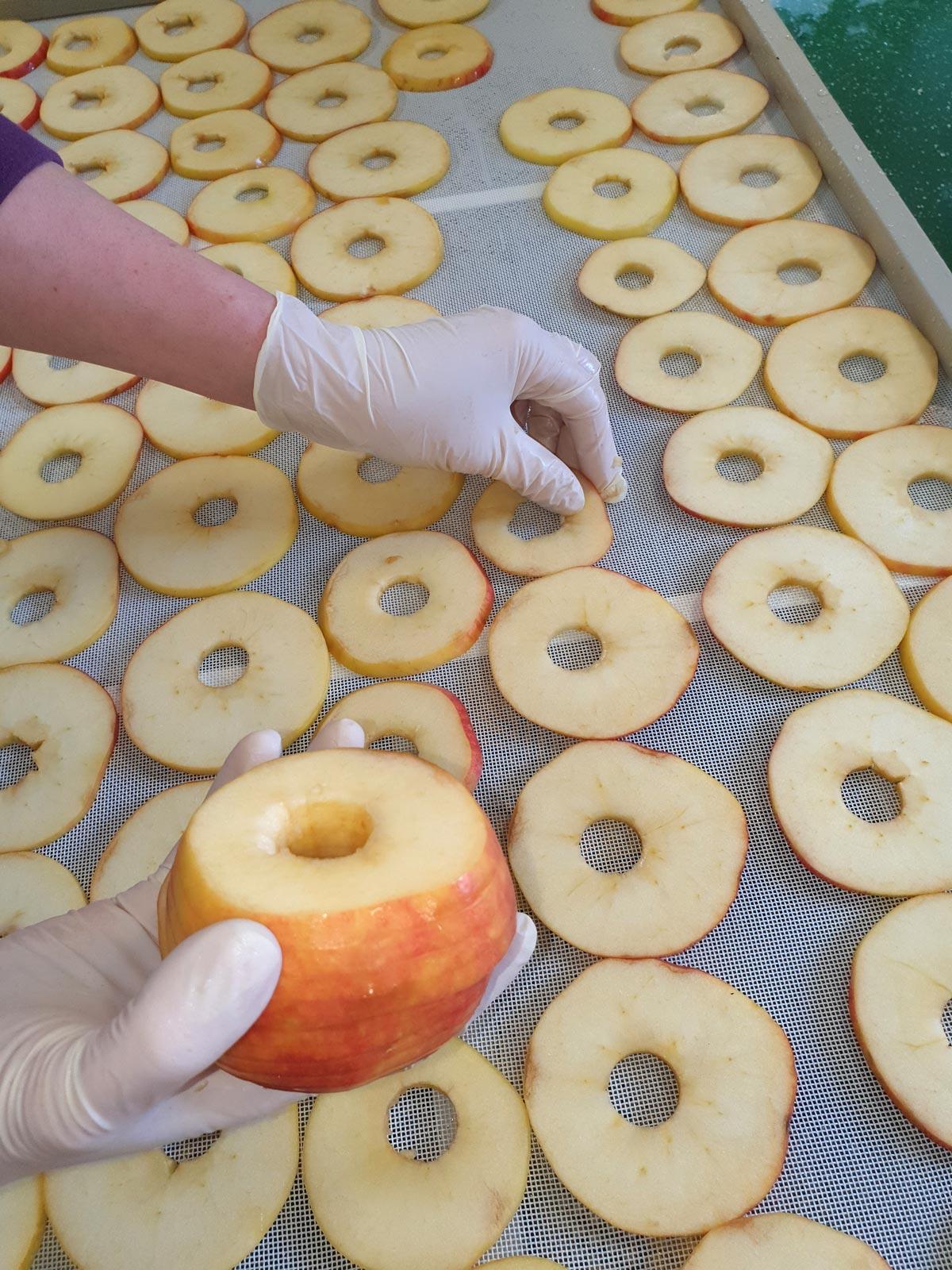 Apfelringe werden zur Trocknung auf ein Blech gelegt